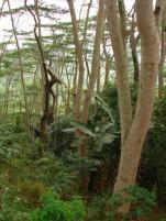timor-2006-286