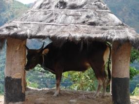timor-2006-293