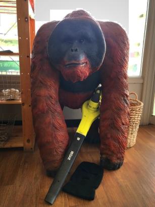 Gorilla 2 IMG_2773