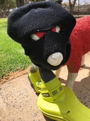 SHEEP 7 IMG_2788